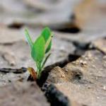 Terzo Settore Ambiente: sviluppo delle competenze di filiera – Edizione 2 – La cooperazione sociale di tipo B del Consorzio SIC si aggiorna sul settore rifiuti e ambiente